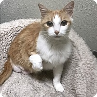 Adopt A Pet :: Flower--Three legs - Redding, CA