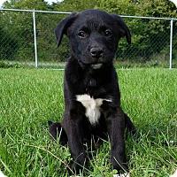 Adopt A Pet :: Verde - Columbia, MD