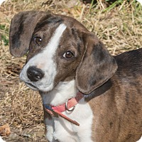 Adopt A Pet :: Sunshine - Elmwood Park, NJ