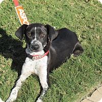 Adopt A Pet :: Maizie - Wichita Falls, TX