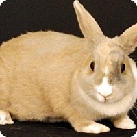 Cinnamon Mix for adoption in Newland, North Carolina - Mariah Hairy