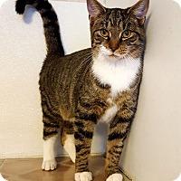 Adopt A Pet :: Gordy - Fairmont, WV