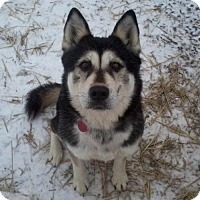 Adopt A Pet :: Faye - Harvard, IL