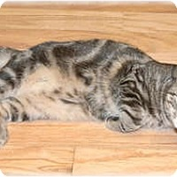 Adopt A Pet :: Robbie - Howell, MI