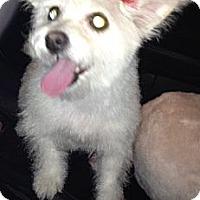 Adopt A Pet :: SUGAR - Mission Viejo, CA