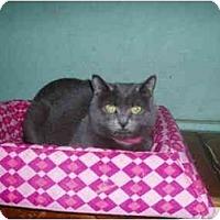 Adopt A Pet :: Glinda - Hamburg, NY