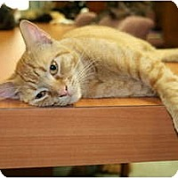Adopt A Pet :: Peaches - Bonita Springs, FL