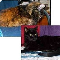 Adopt A Pet :: Max & Tootsie - Summerville, SC