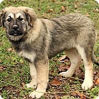 Adopt A Pet :: Annastasia - Staunton, VA