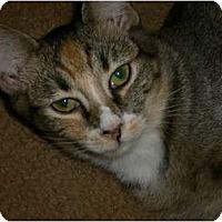Adopt A Pet :: Zena - Brea, CA