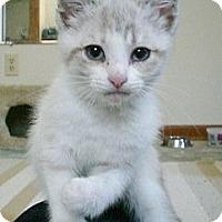 Adopt A Pet :: Glimmer - Byron Center, MI