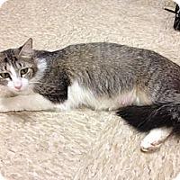 Adopt A Pet :: Erin - Fort Lauderdale, FL