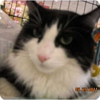 Adopt A Pet :: Mickey - Riverside, RI