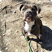 Adopt A Pet :: Katie - Tinton Falls, NJ