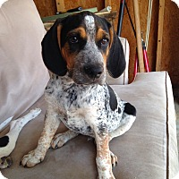Adopt A Pet :: PJ-pending adoption - East Hartford, CT