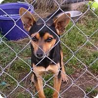 Adopt A Pet :: Chico - Waller, TX