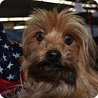 Adopt A Pet :: Laya - Seattle, WA