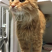 Adopt A Pet :: Don - Herndon, VA