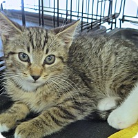 Adopt A Pet :: carter - Fort Wayne, IN