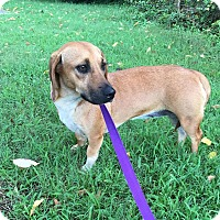 Adopt A Pet :: Bessie - Windham, NH