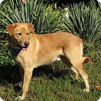 Adopt A Pet :: Bentley - Oakland, AR