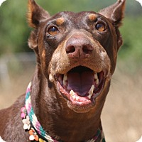 Adopt A Pet :: Sierra - Fillmore, CA