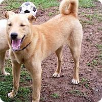Adopt A Pet :: Clyde - Jefferson, TX