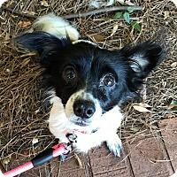 Adopt A Pet :: Camilla - Atlanta, GA