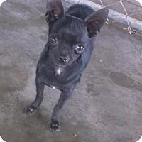 Adopt A Pet :: Beauty - Bonifay, FL
