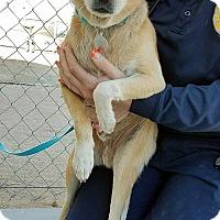 Adopt A Pet :: Neno - California City, CA