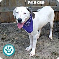 Adopt A Pet :: parker - Kimberton, PA