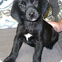 Adopt A Pet :: Felix - Eastpoint, FL