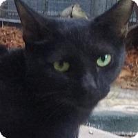 Adopt A Pet :: Salem - Yorba Linda, CA