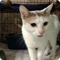 Adopt A Pet :: Lola - Avon, OH
