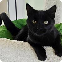 Adopt A Pet :: *FUDGE - Sacramento, CA