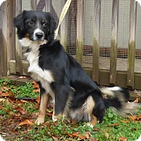 Adopt A Pet :: Preston - Hartford, CT