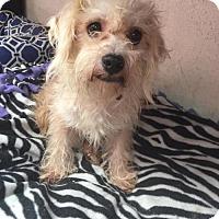 Adopt A Pet :: William Wallace - Phoenix, AZ
