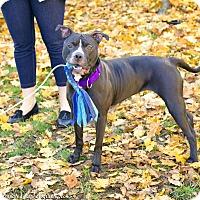 Adopt A Pet :: Ruby - Mansfield, MA