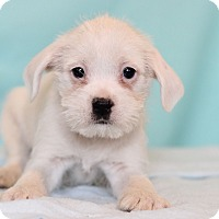 Adopt A Pet :: Ateyu - Waldorf, MD