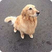 Adopt A Pet :: Halo - Vancouver, WA