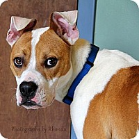 Adopt A Pet :: Sheriff - Dallas, GA