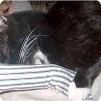 Adopt A Pet :: Rocky - Summerville, SC