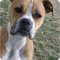 Adopt A Pet :: Ingrid - Meridian, ID