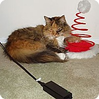 Adopt A Pet :: Julie - Sterling Hgts, MI