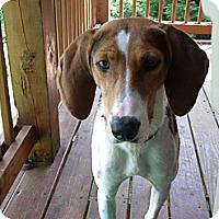 Adopt A Pet :: Daisy - Leesburg, VA
