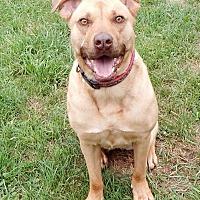 Adopt A Pet :: Sky - Lapeer, MI