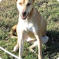 Adopt A Pet :: Tye - Waller, TX