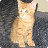 Adopt A Pet :: Goldie - Kirkwood, DE