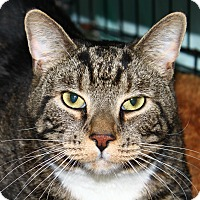 Adopt A Pet :: Jerry - North Branford, CT