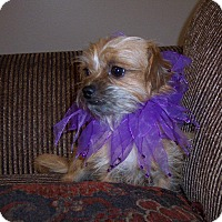 Adopt A Pet :: Rusty - LEXINGTON, KY
